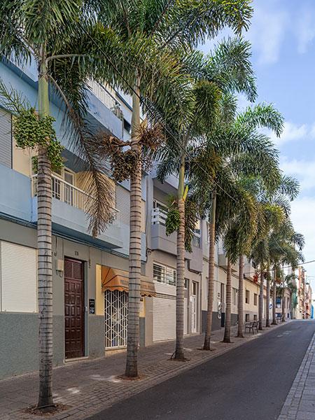 Urban Santa Cruz